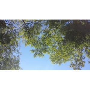 Muito sol e calor