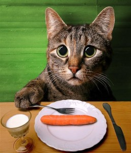 R-03 - dieta-gato-8523